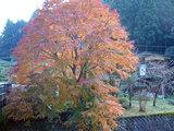埼玉の紅葉