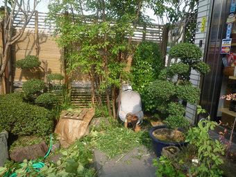 庭師が暑い中、年一回のお手入れ作業中